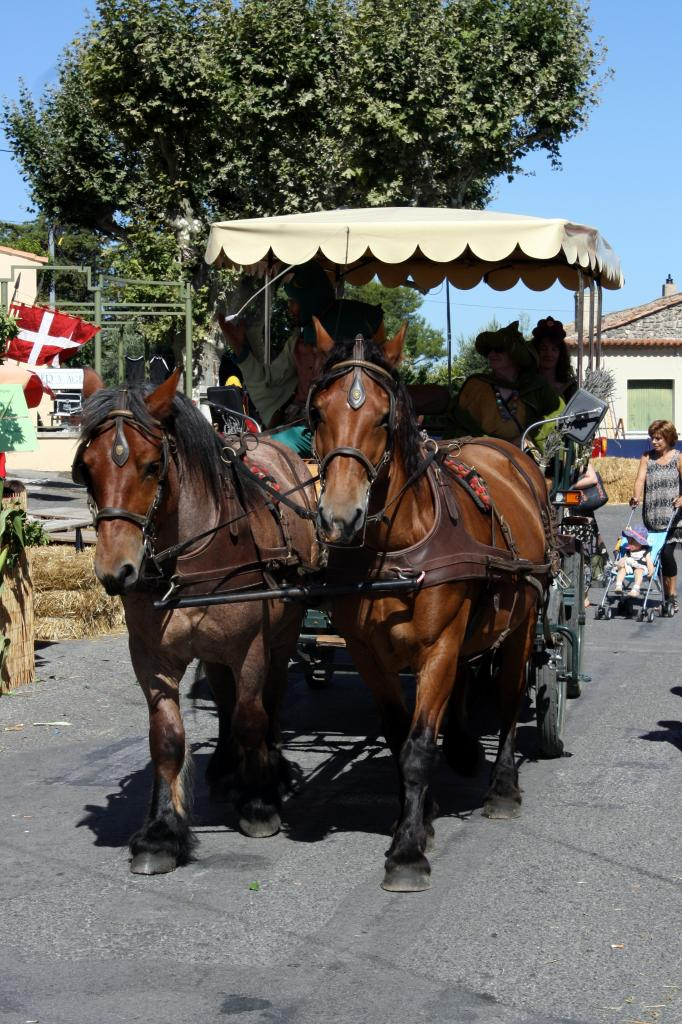 Superbes chevaux